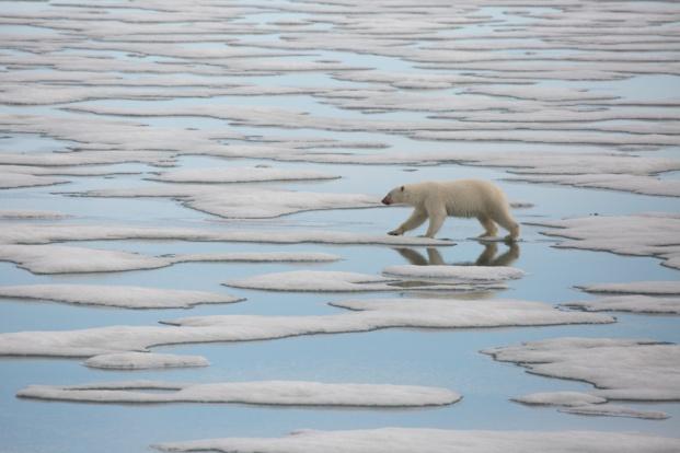 """La série évènement """"Planète Hostile"""" débarque à partir du 28 avril sur National Geographic"""