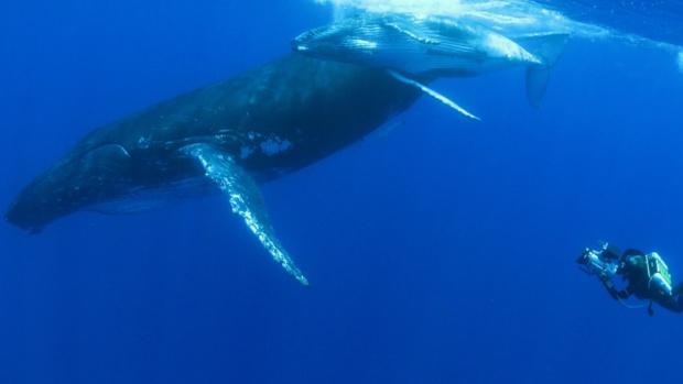 """""""Quand les baleines et tortues nous montrent le chemin"""" le documentaire évènement de Rémy TEZIER sur ARTE, le 8 mai"""