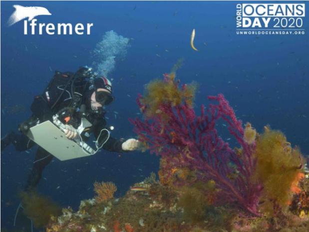 Journée mondiale de l'océan : L'Ifremer met l'océan à l'honneur avec des personnalités de la mer et des chercheurs de l'Institut depuis les trois océans