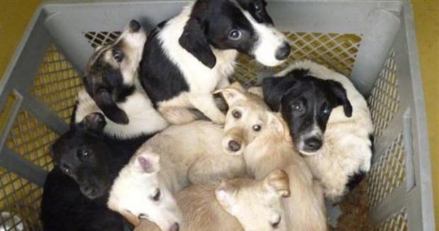 """Les conditions animalières en Nouvelle-Calédonie à la loupe dans """"Les sans voix"""" le 29 novembre sur Nouvelle-Calédonie La 1ère"""