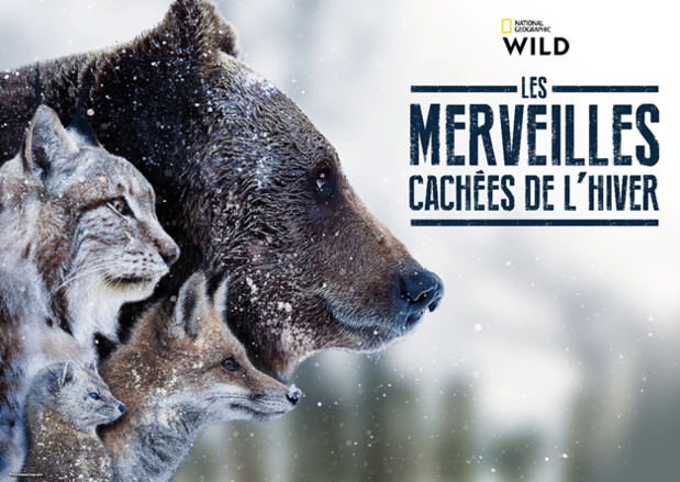 La vie des espèces sauvages sur trois continents différents dans « Les merveilles cachées de l'hiver », le 13 janvier sur National Geographic Wild