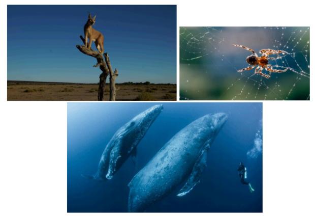 Plongée dans le monde animal dés le 6 juillet sur Discovery Science