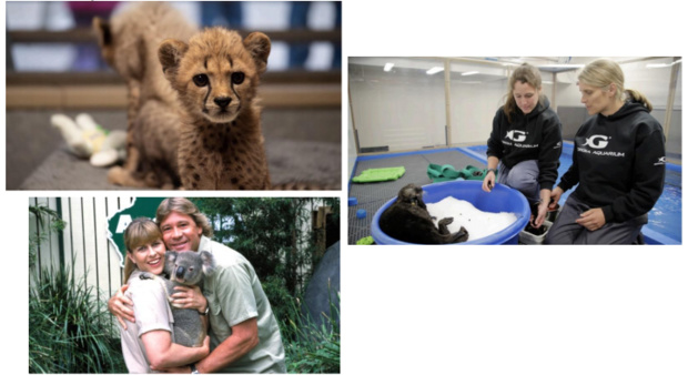 """""""Un été au zoo"""" dés le 5 juillet sur Discovery Family"""