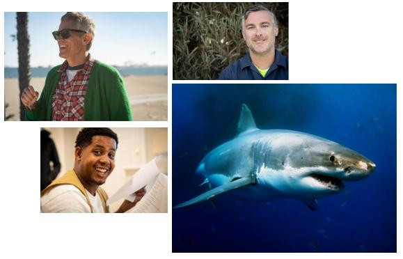 Les Jackass débarque pour la Shark Week 2021 sur Discovery Channel