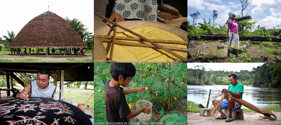 crédit photos: Parc Amazonien de Guyane