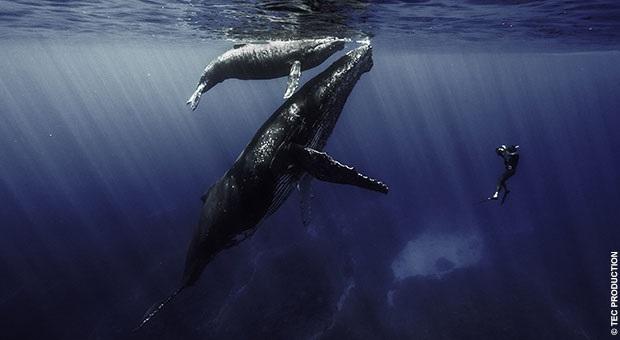 """""""Quand les baleines et tortues nous montrent le chemin"""" le documentaire de Rémy TEZIER sur Ushuaïa TV, le 13 novembre"""