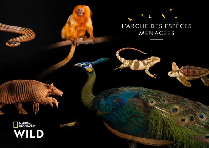 « L'arche des espèces menacées » issue du projet du photographe Joël Sartore de retour pour une nouvelle saison le 9 décembre sur National Geographic Wild