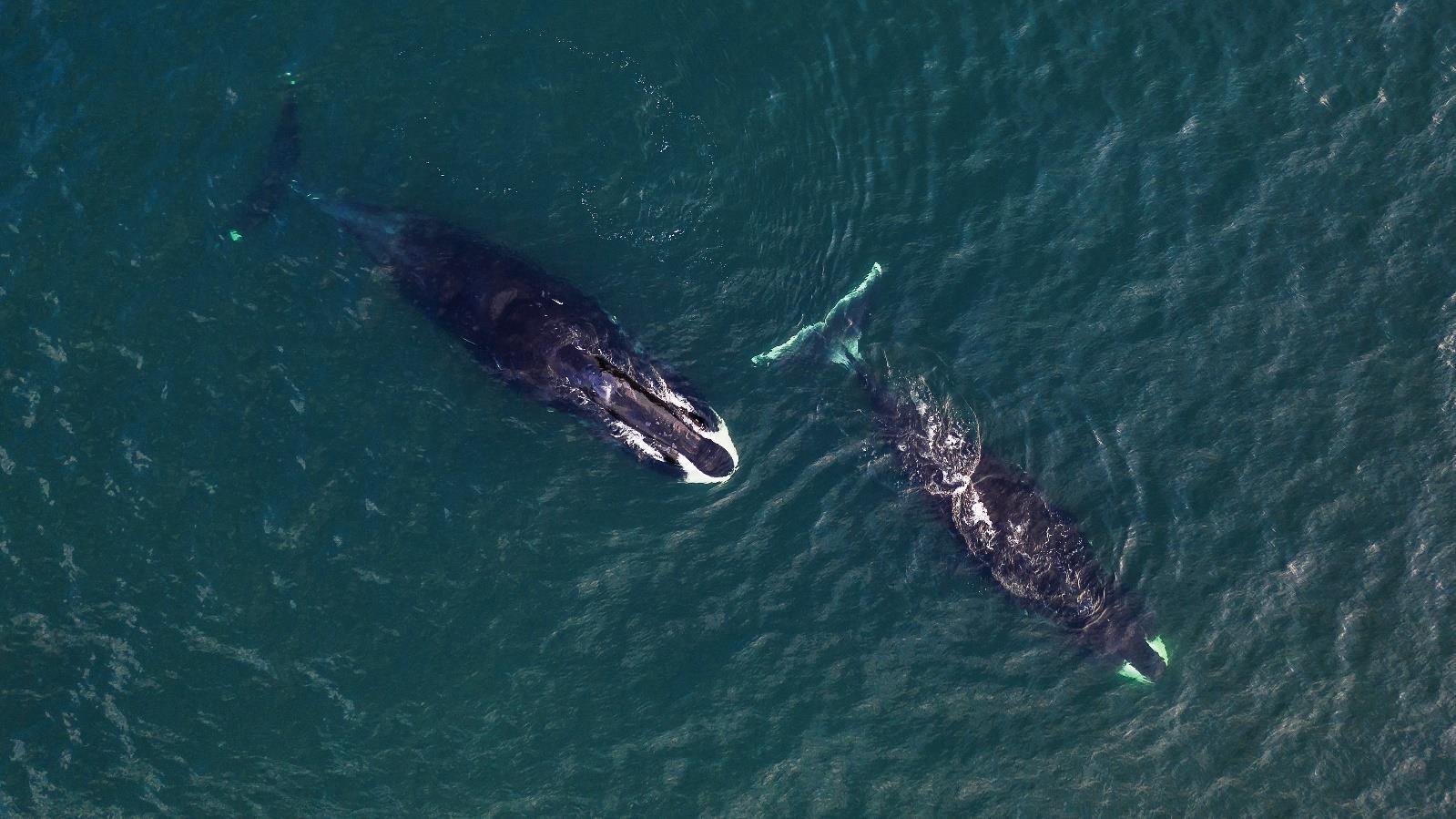"""""""A la recherche des géants des mers"""": Discovery Family célèbre le 19 février la journée internationale des baleines"""