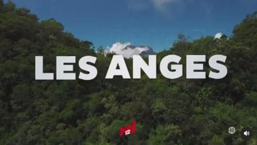 """La Réunion: Plusieurs personnes agressés par des candidats de l'émission """"Les Anges de la Télé-Réalité"""""""