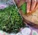 https://www.megazap.fr/Les-Plantes-vertes-comestibles-du-Pacifique--la-nouvelle-emission-culinaire-inedite-sur-France-O_a4817.html