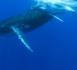 https://www.megazap.fr/Quand-les-baleines-et-tortues-nous-montrent-le-chemin-le-documentaire-evenement-de-Remy-TEZIER-sur-Reunion-La-1ere-le_a5763.html