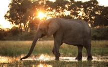 """Diffusion évènement du documentaire """"Survie au fil de l'eau"""" au coeur du delta d'Okavango, le 4 novembre sur Nat Geo Wild"""