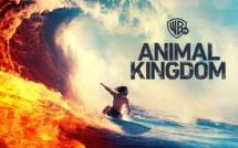 """Warner TV: La saison 4 inédite de """"Animal Kingdom"""" débarque à partir du 14 novembre"""