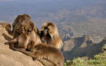 """National Geographic Wild met le cap sur l'Afrique et dévoile les beautés de la vie sauvage luxuriante du continent africain avec """"Destination Wild : les merveilles de l'Afrique"""""""