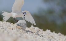 La faune de la Nouvelle-Calédonie mise à l'honneur le 14 juin sur France Ô
