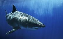 En juillet sur National Geographic Wild, partez à la rencontre des espèces de requins les plus rares et les plus dangereuses avec le « Shark Festival »