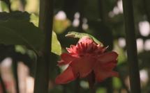 L'art des jardins en Martinique à retrouver ce dimanche dans Passion Outremer sur France Ô