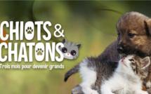 """La nouvelle série documentaire """"Chiots & Chatons 3 mois pour devenir grands"""" à partir du 20 septembre sur C8"""