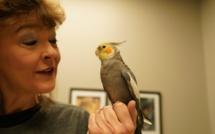 Dr T, vétérinaire du Texas, la nouvelle série documentaire de National Geographic Wild