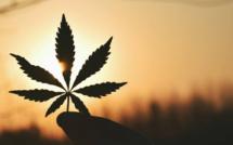 Légalisation du cannabis: quel est le prochain sur la liste?