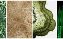 Innovation réunionnaise : La fibre Zeop passe au vert